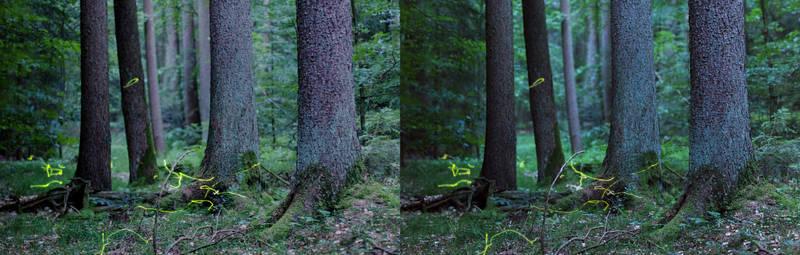 3D Fireflies IV
