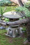 Lantern and Pine