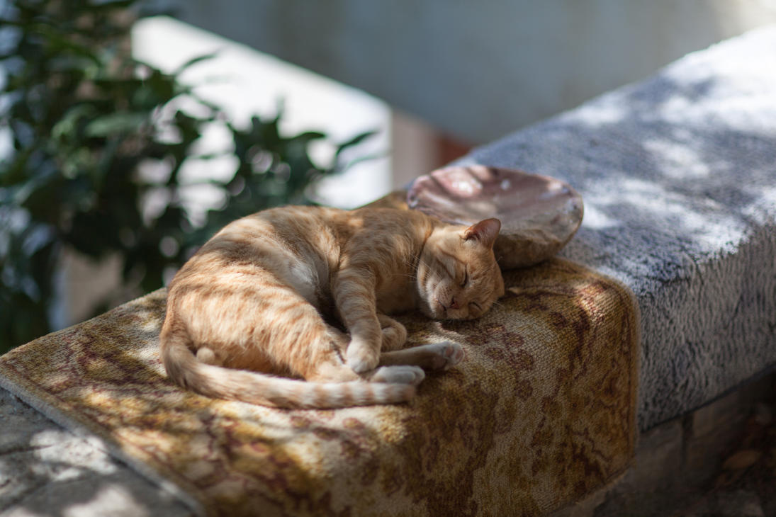 Lazy Tomcat by Quit007