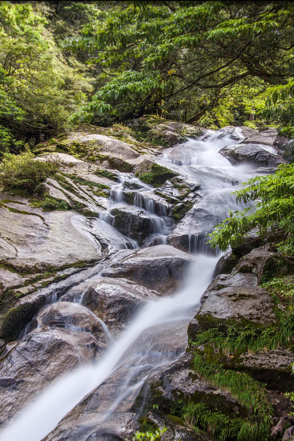 Yakushima Stream 4
