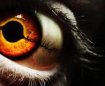 stich eye