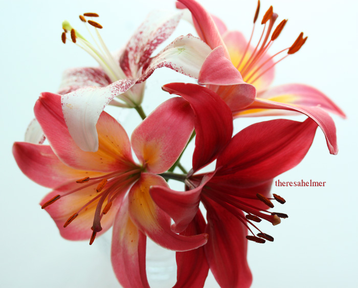 Garden Lilies by theresahelmer