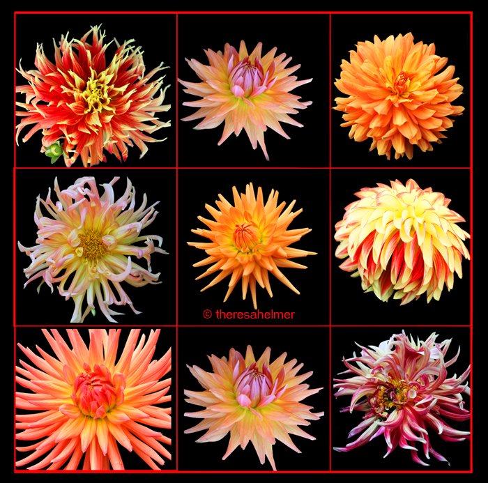 Yellow n Orange Dahlias (from my garden) by theresahelmer