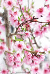 Full Bloom Garden Peach Tree