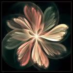 Softflower