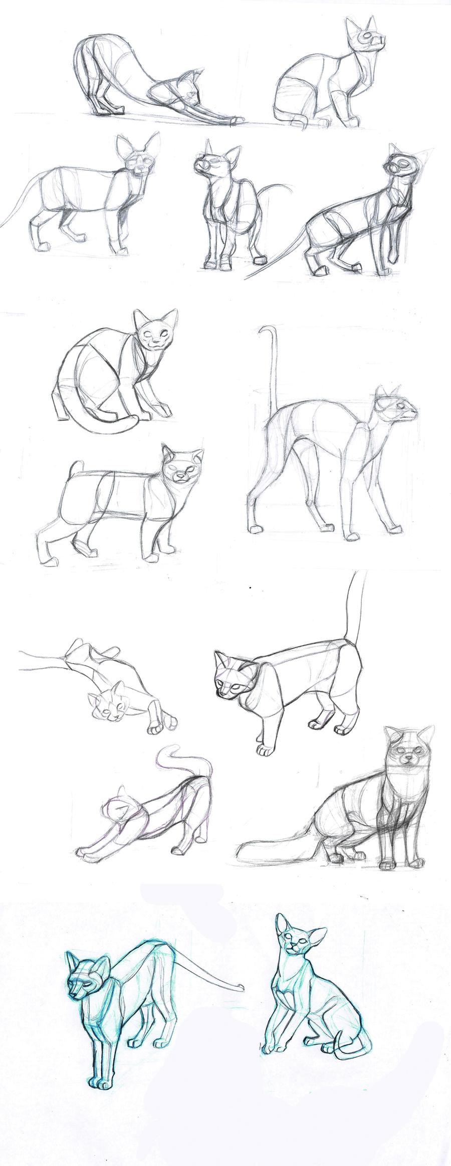 cat's body by sofmer on DeviantArt