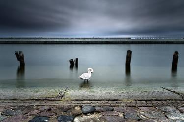 Swan by MichalKownacki