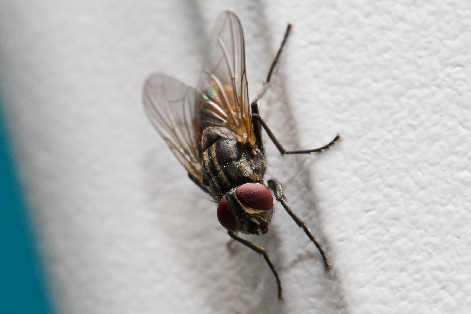 Z Flyonthewall Flies on the wall are less