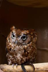 Look an Owl by kenjis9965