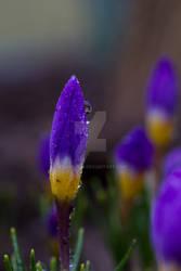 Purple Spire