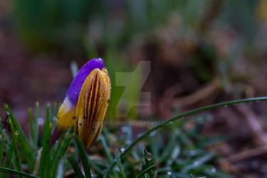 Flower Snuggling