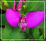Purple Flower Macros by wishez