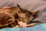 Pikiti Sleeps