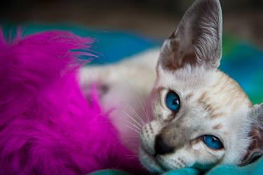 New Kitty 2 by wishez