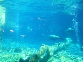 Underwater Zoo Scene