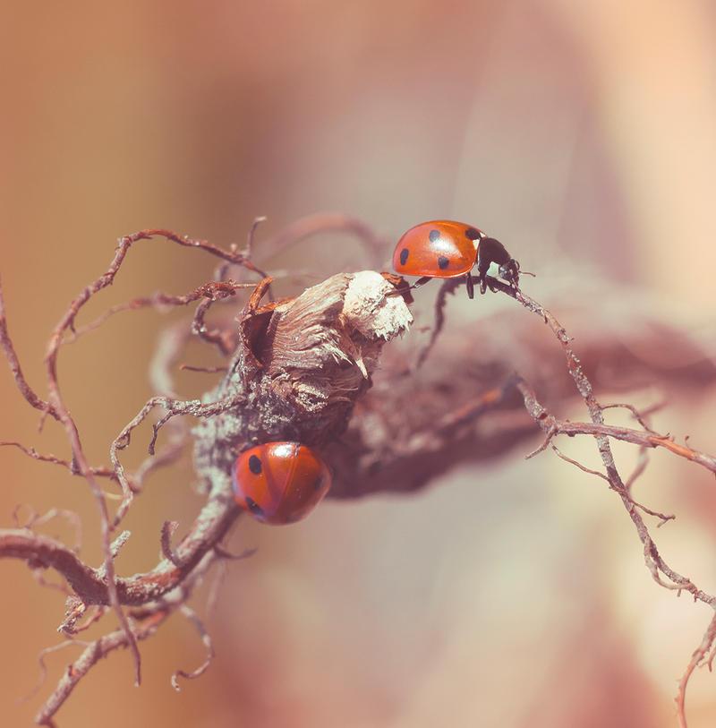 ladybird by YourFavoriteProfil