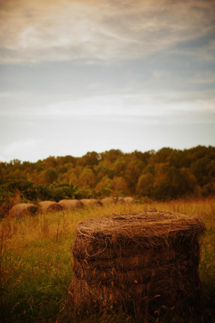 Asqe by cenkphoto