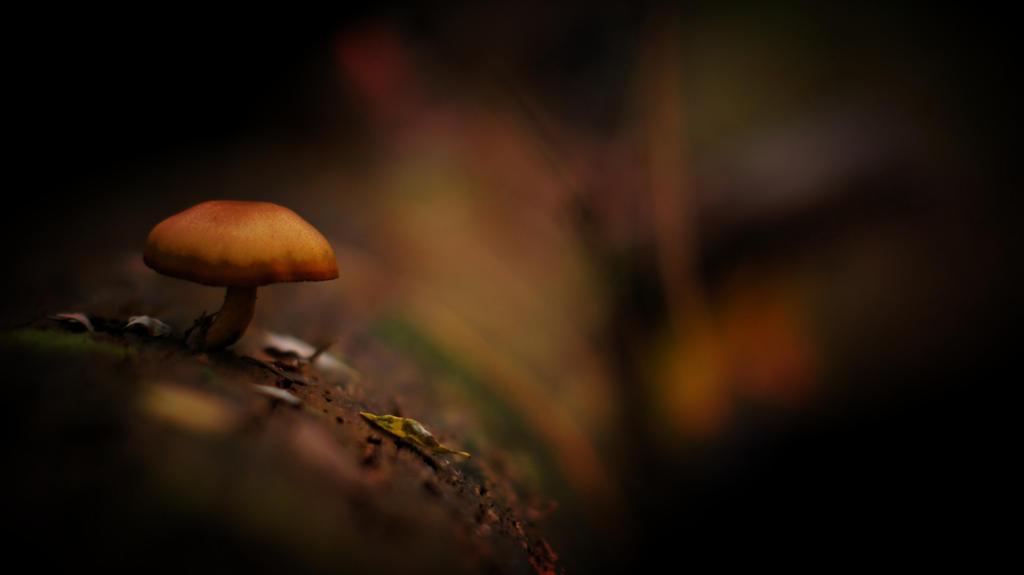 filr by cenkphoto
