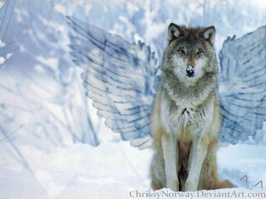 Wolf with wings by ChrissyNorway on DeviantArt