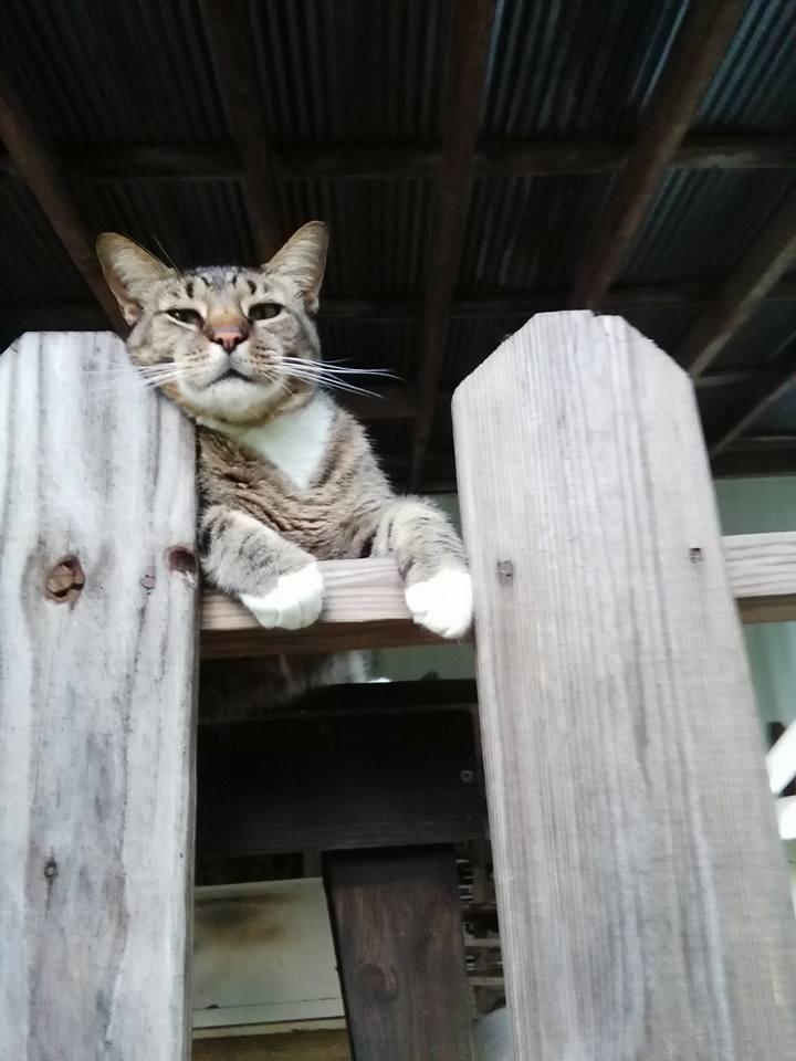 On the Fence by PurpleLikeWoah