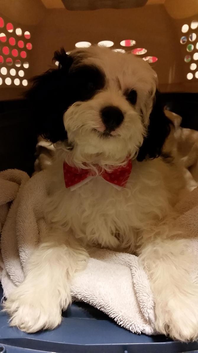 Doggy Who! by TwiUnderSeeker