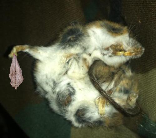 Dead Mouse, Dirty Rag by HellishDeer