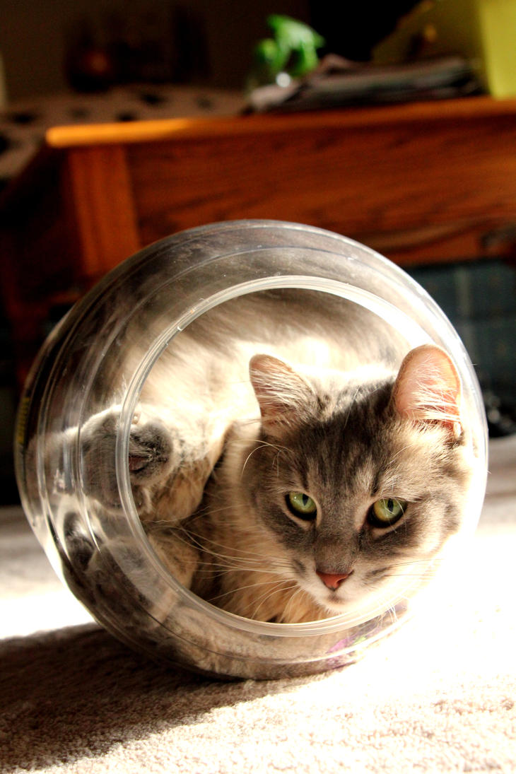 http://th01.deviantart.net/fs70/PRE/i/2011/213/0/8/cat_in_a_jar_revisited_by_flavoredwaters-d42ecik.jpg