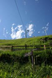 Gruener Weg mit Strommast