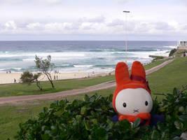 Surfer's paradise by miffona
