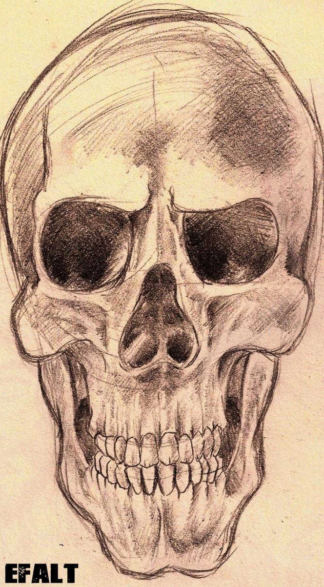 Skull by Efalt