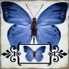 Blue Butterfly by kiya71677