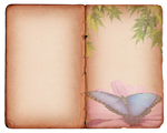 Butterfly Texture-Background