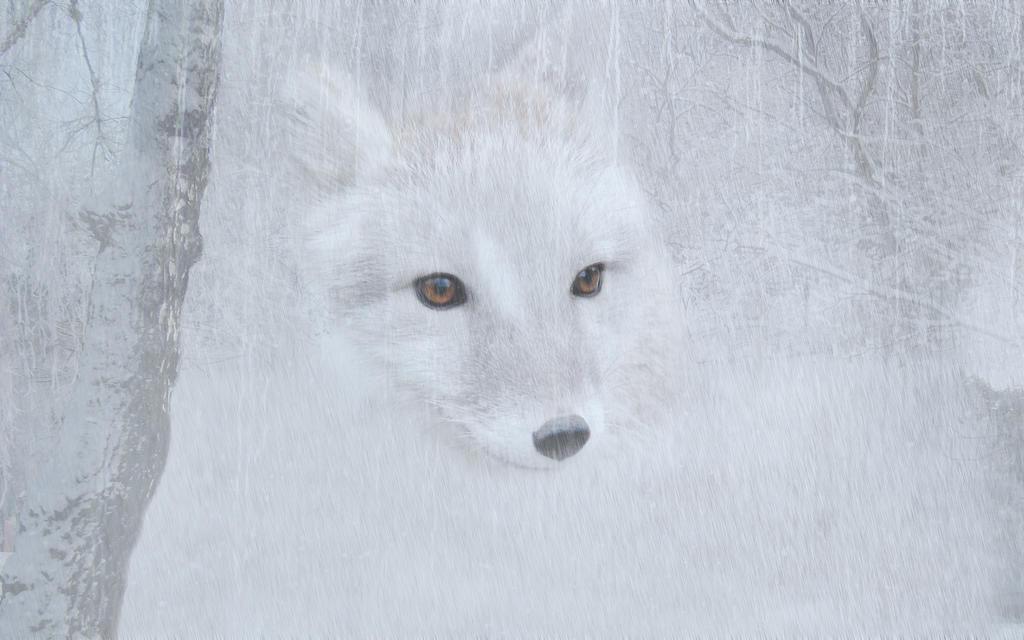 Arctic Winter by cazcastalla