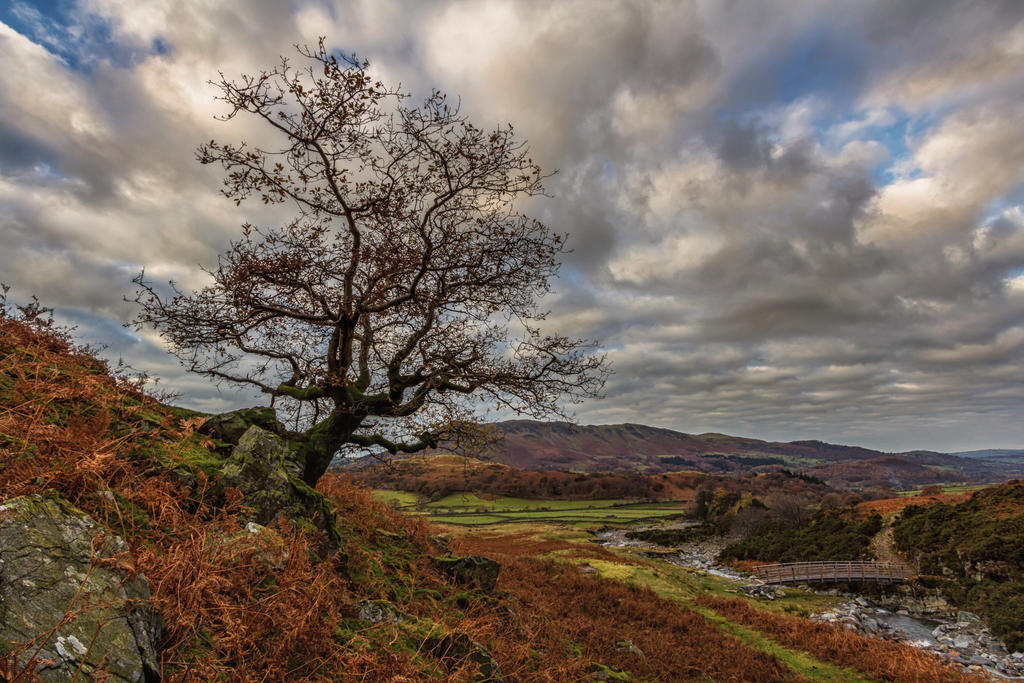 The Tree And The Bridge by lesterlester