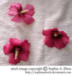 stock 18 : pink flowers