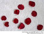 stock 234: rose petals