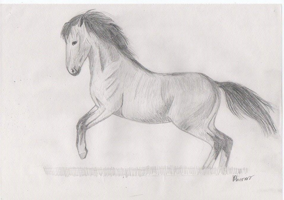 White horse pencil drawing by avadakaziavra