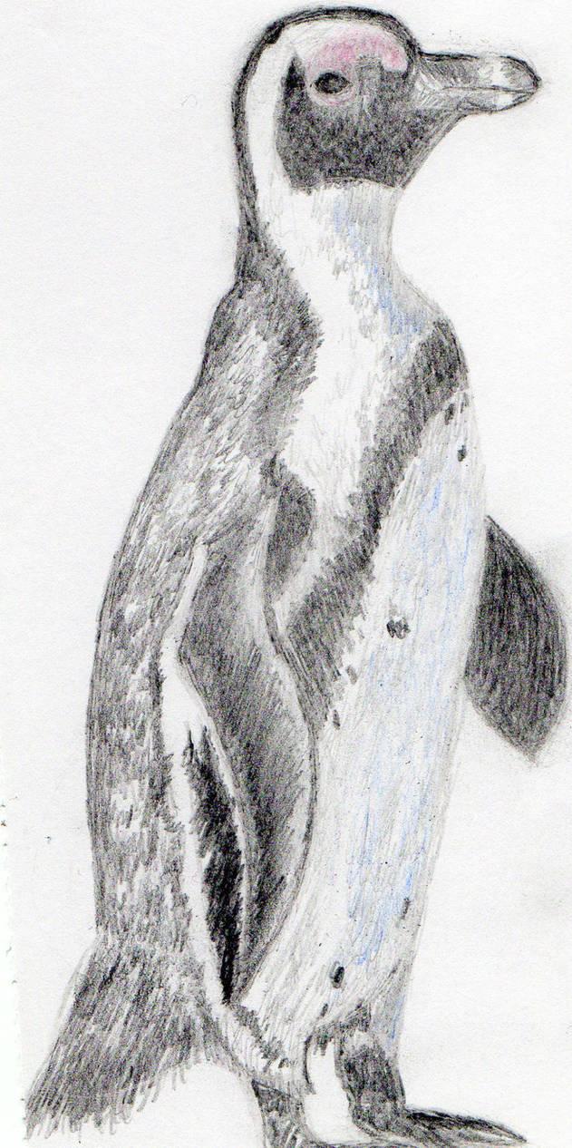 Penguin pencil drawing by avadakaziavra on deviantart