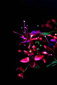 In shadow growing flowers