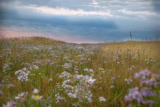 Flowers hidden between dunes