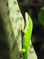 Stan the Lizard by sunshinemylove