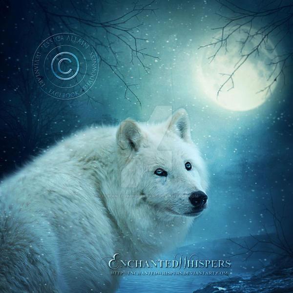White Wolf by EnchantedWhispersArt