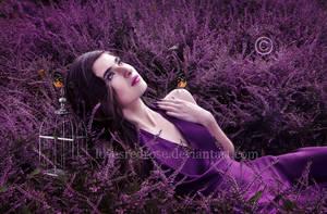 Lavender-Fields by EnchantedWhispersArt