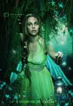 Magical-Woods