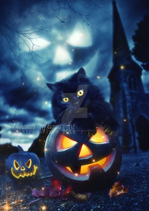 Pumpkin Kitty By EnchantedWhispersArt ...