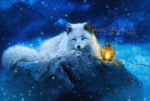 White-fox by EnchantedWhispersArt