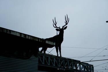 deer by photophucker