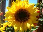 Sunny fayse