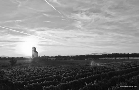 Wineyard Black and White