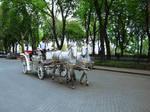 Cart Stock